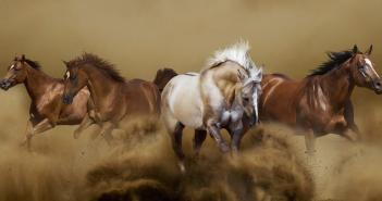 Wild horses © Shutterstock